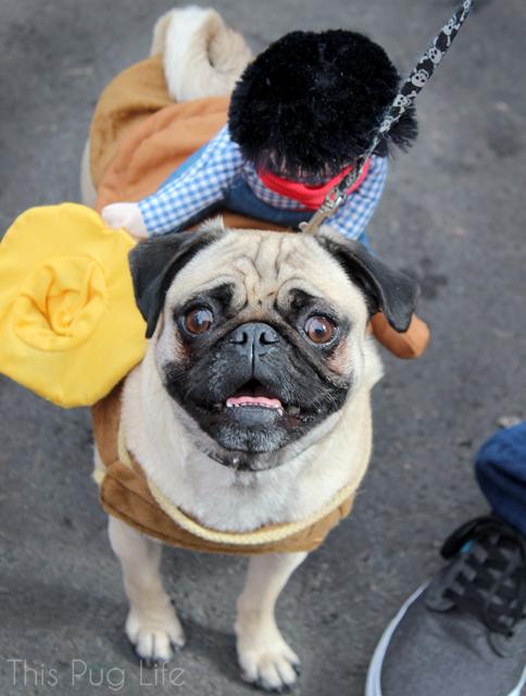 Beggin Pet Parade Pug