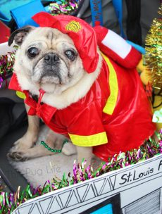 Fire Pug Fireman Dog Costume Beggin' Pet Parade