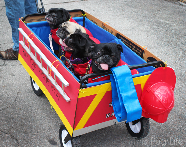 Fire Pugs Fireman Dog Costume Beggin' Pet Parade