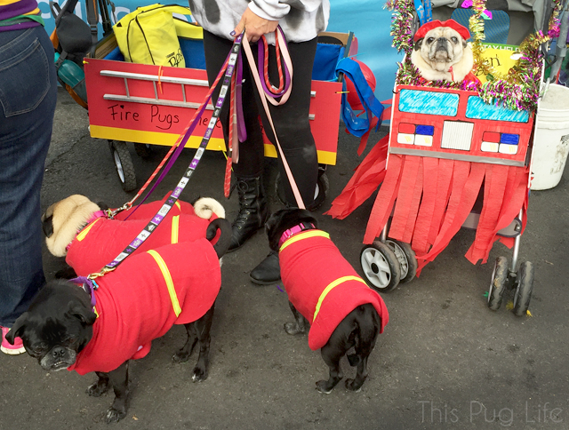 Fire Pugs Fireman Costumes Beggin Pet Parade