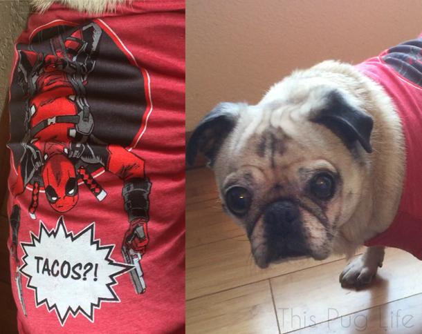 Loot Pets February Deadpool Dog Shirt