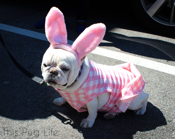 Easter Bunny French Bulldog