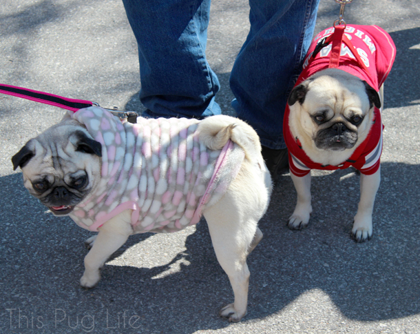 Treats Unleashed Easter Egg Hunt Pugs