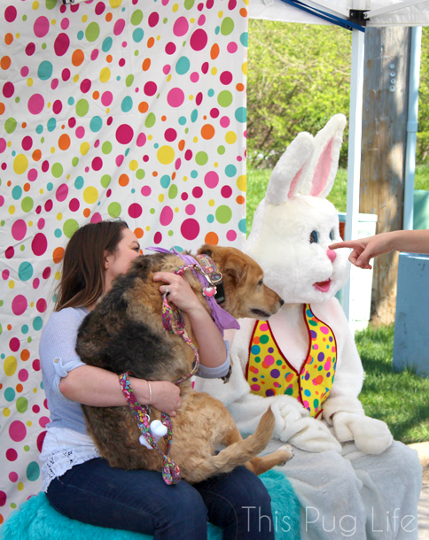 Dog Scared of Easter Bunny