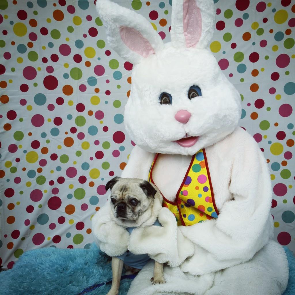 Pug and Easter Bunny