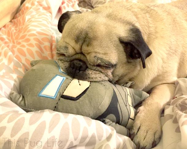 Loot Pets March 2016 Batman Vs Superman Dog Toy