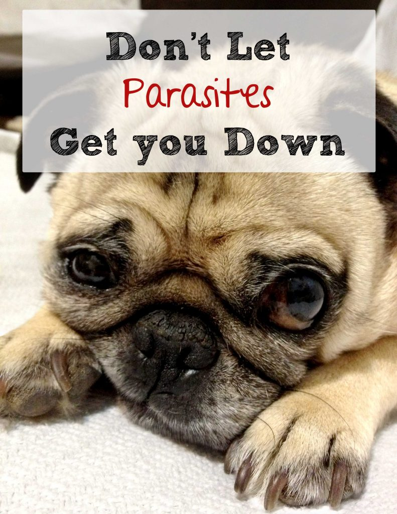 Dont' let parasites get you down