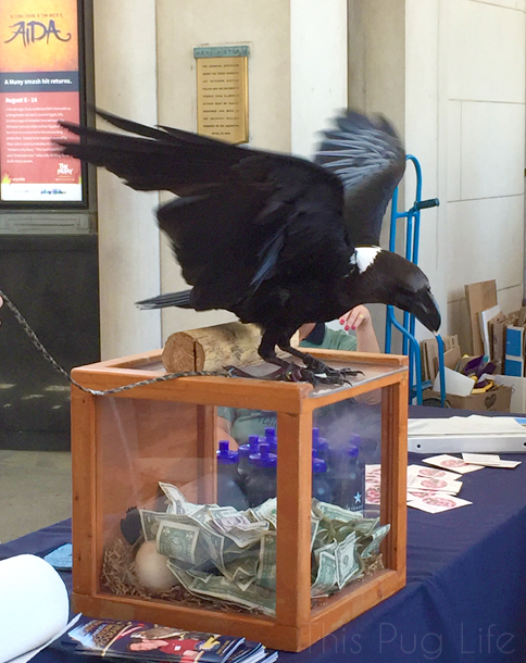 St. Louis Earth Day Festival Raven