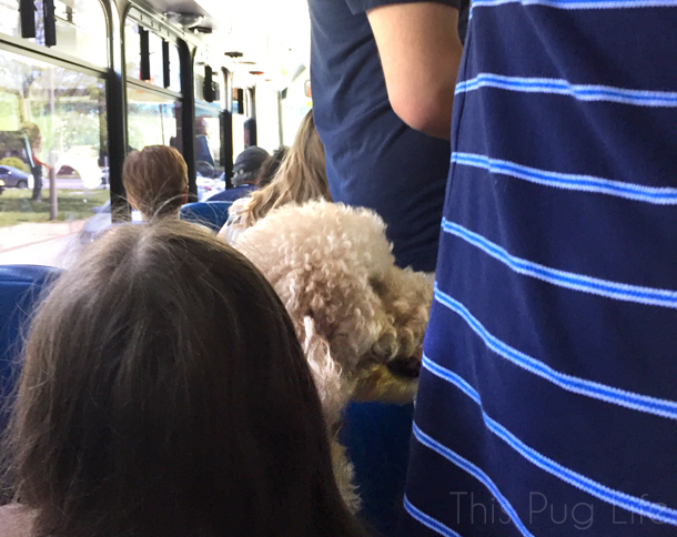 St. Louis Earth Day Festival Dog Friendly Shuttle