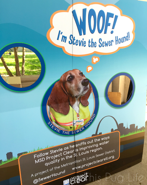 Stewie the Sewer Hound