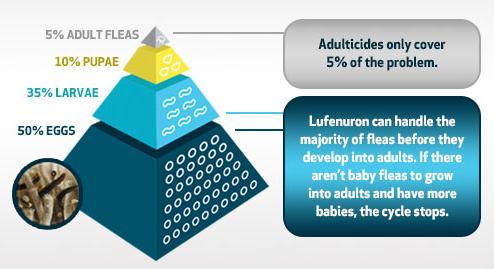 fleas_luferon_pyramid