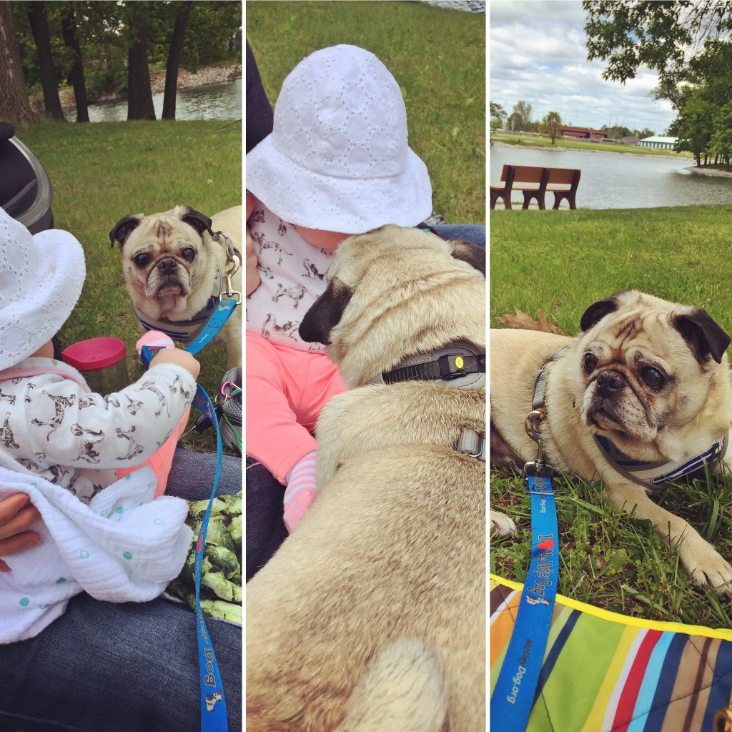 Pug and Baby at the Park