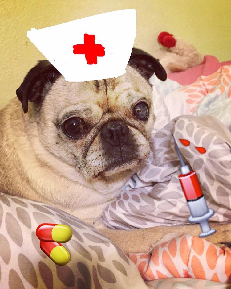 Pug Nurse Snapchat