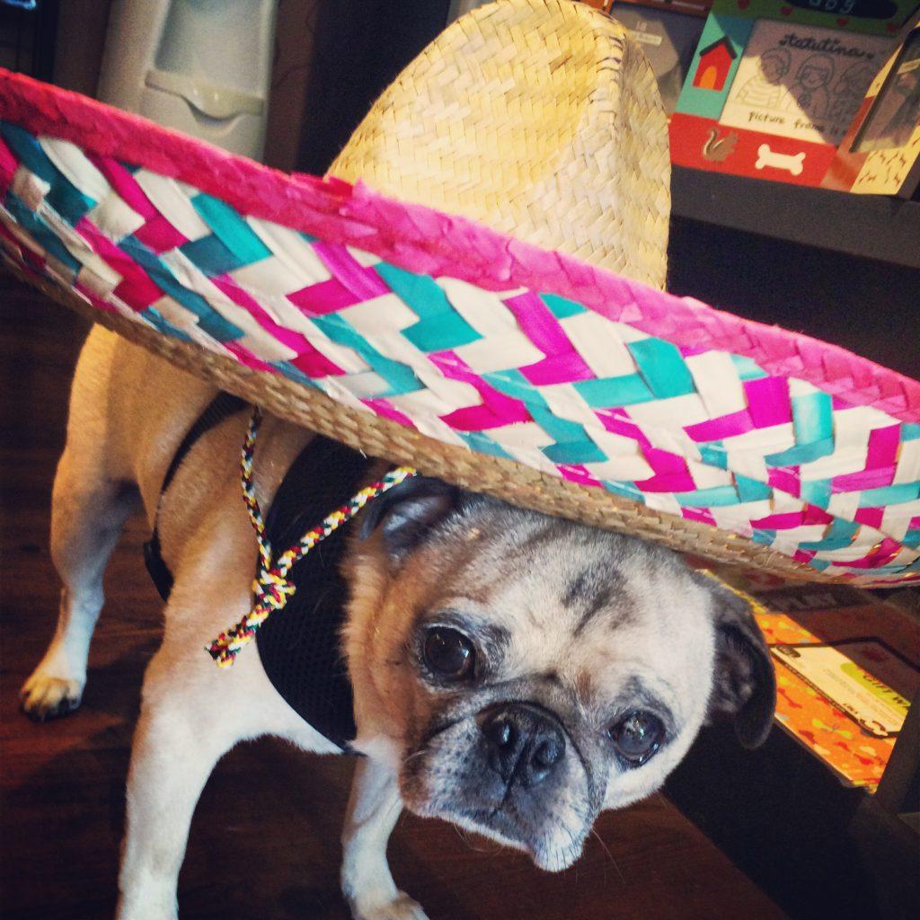 Cinco de Mayo Sombrero Pug