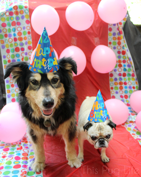 Molly and Pug Birthday Hats
