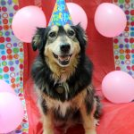 Rescue Dog has an Epic 13th Birthday Party