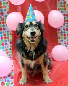 Rescue Dog 13th Birthday Party