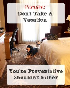 Parasites Don't Take a Vacation, Yearly Prevention