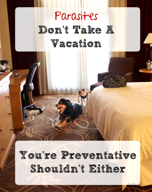 Parasites Don't Take a Vacation, Year Round Parasite Prevention