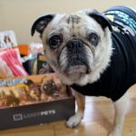 "Loot Pets April 2016 ""Quest For Bacon"" Review"