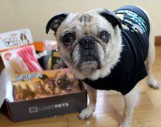 Pug Loot Pets April 2016