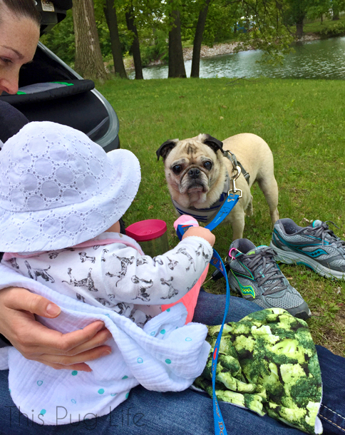 Baby holding Pug's leash