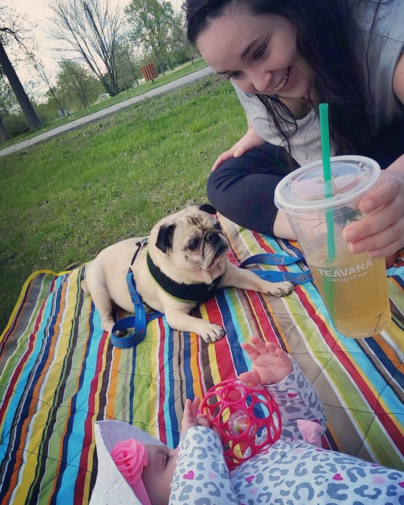 Pug Picnic with Baby