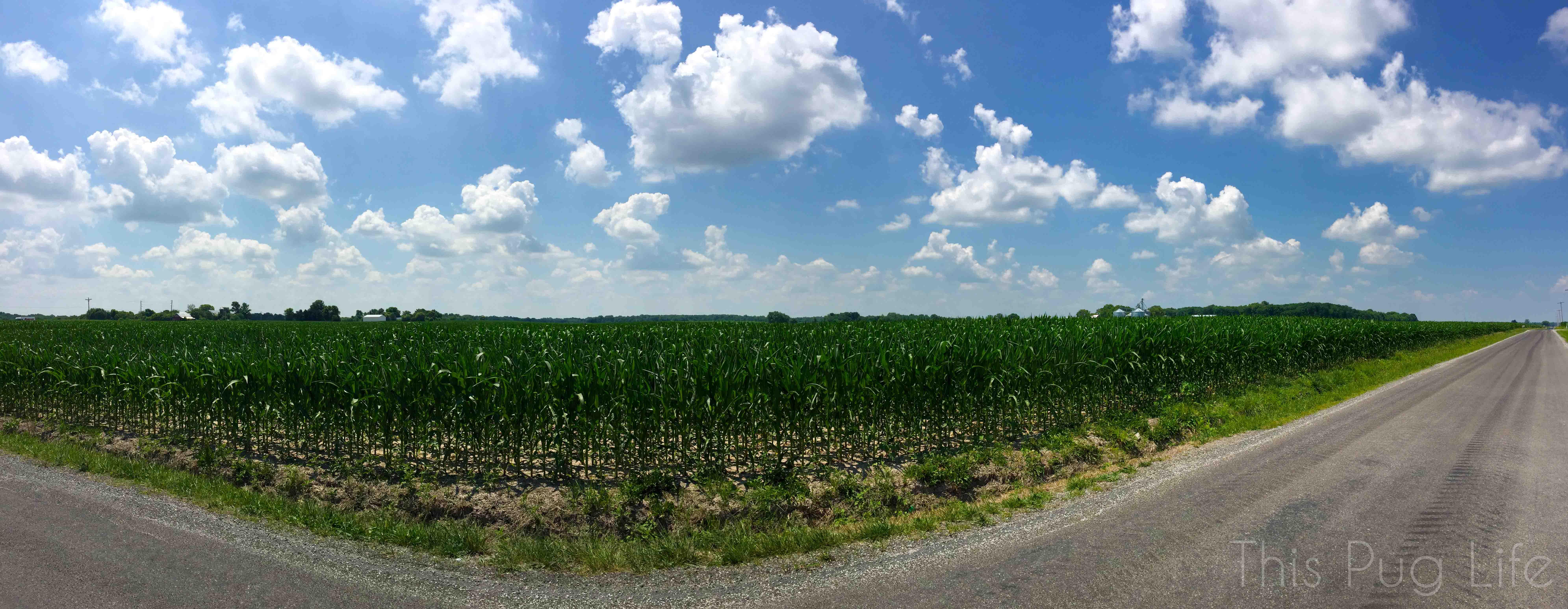 Corn Field Sky