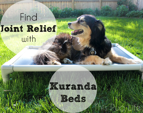 Find Joint Relief with Kuranda Beds