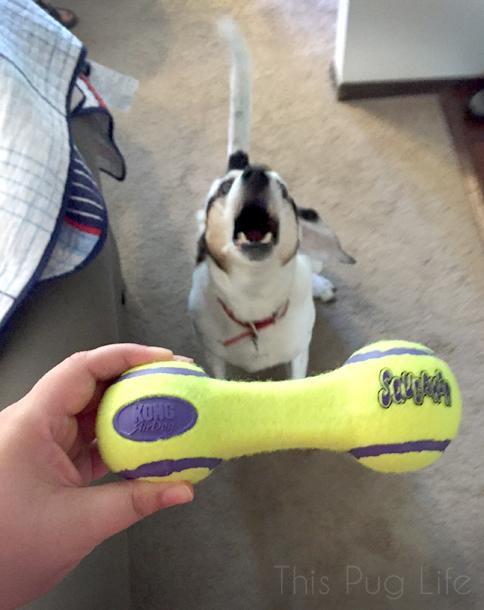 Kong Tennis Ball Barbell