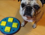 Pug Reviews: Outward Hound Doggy Blocks Puzzle Toy