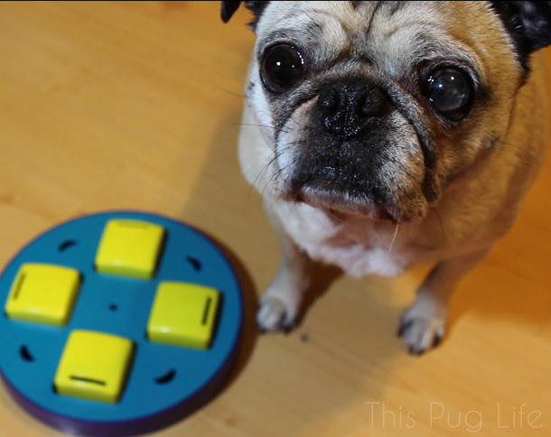 Pug Outward Hound Doggy Blocks Puzzle Toy
