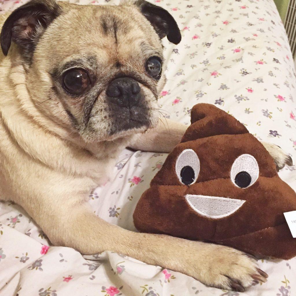 Pug Poop Emoji Toy