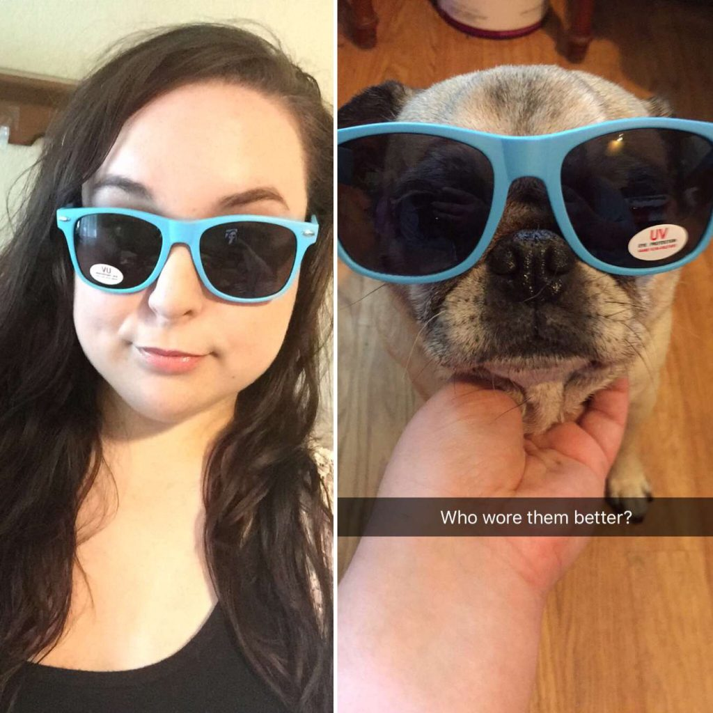 Pug wearing Chewy Sunglasses