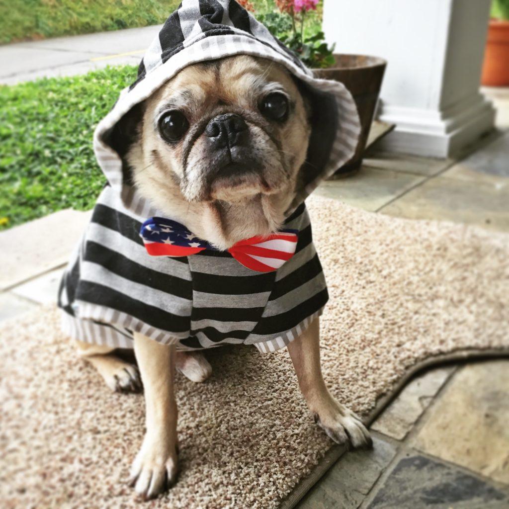 Pug Hoodie American Flag Bow Tie