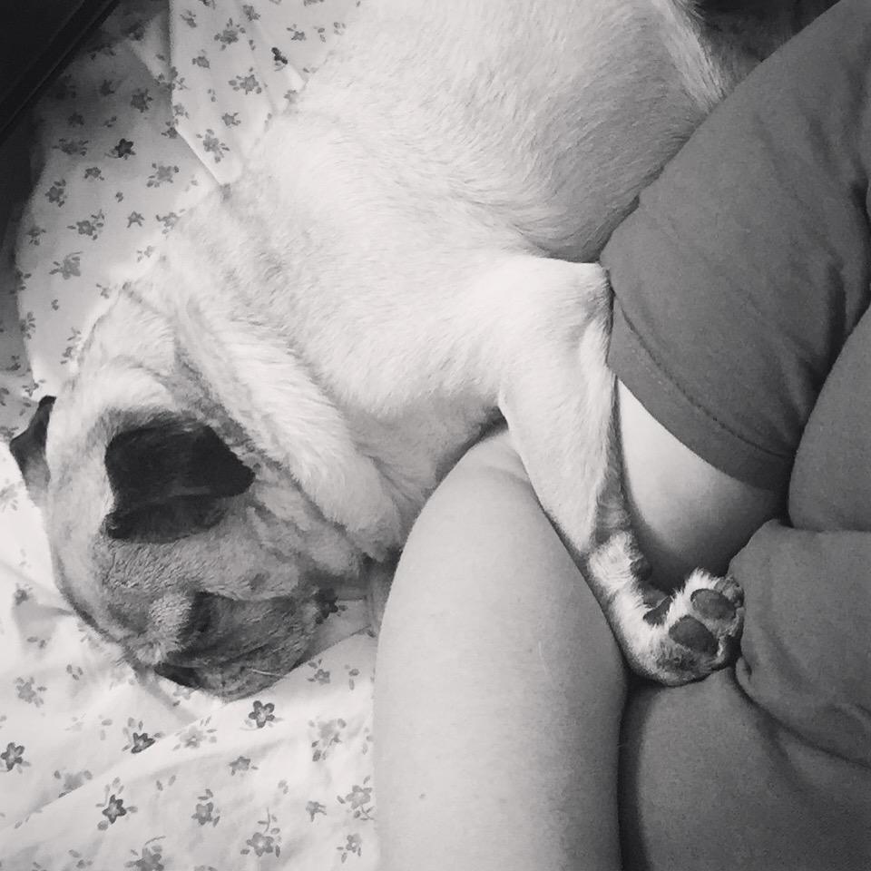 Pug Cuddle