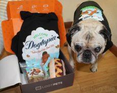 Pug Loot Pets June 2016 Dogtopia