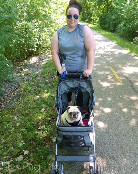 Pug Stroller Strut Your Mutt 9000 Step Challenge