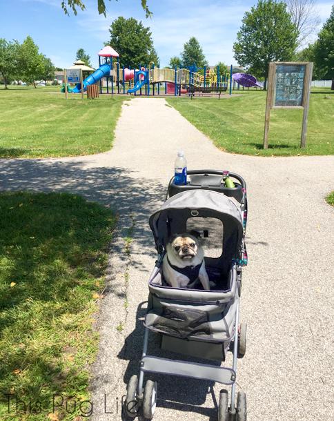 Pug Stroller Park