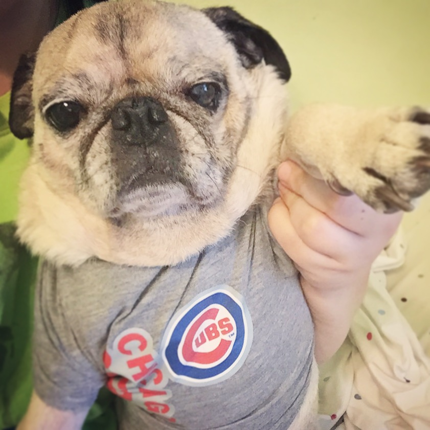 Pug Chicago Cubs Shirt