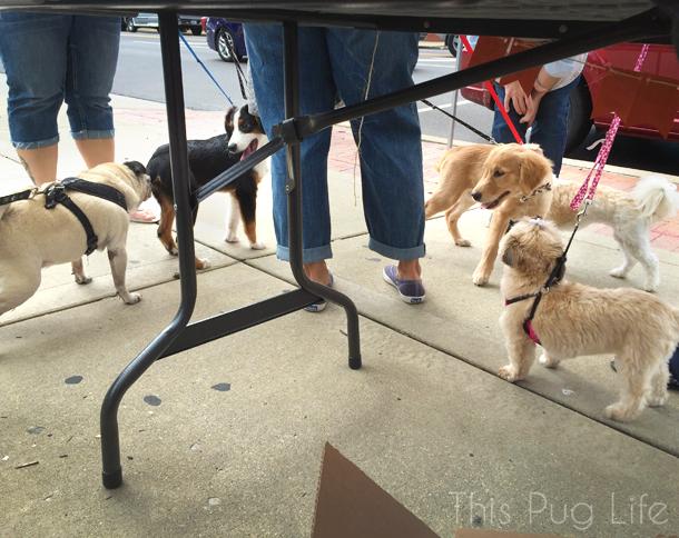 Bake Sale Farmer's Market Dogs