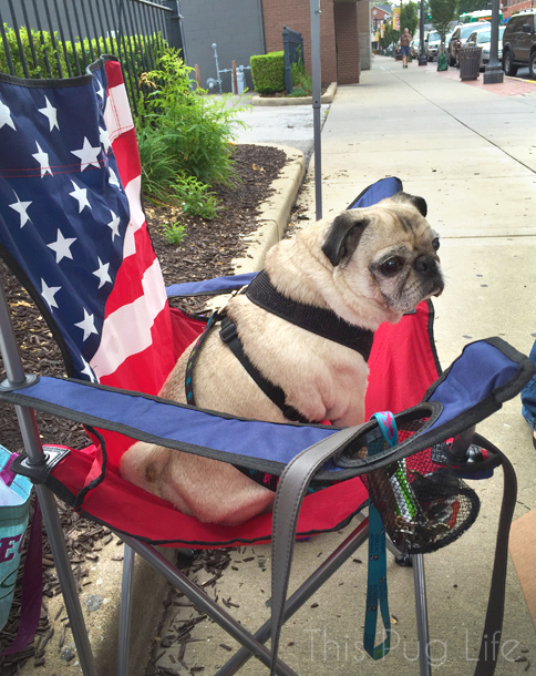 BAke Sale Pug in lawn chair