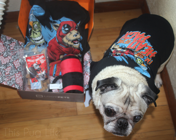 Pug Loot Pets August Dogpool Shirt