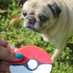 A Wild Pugachu Appeared!