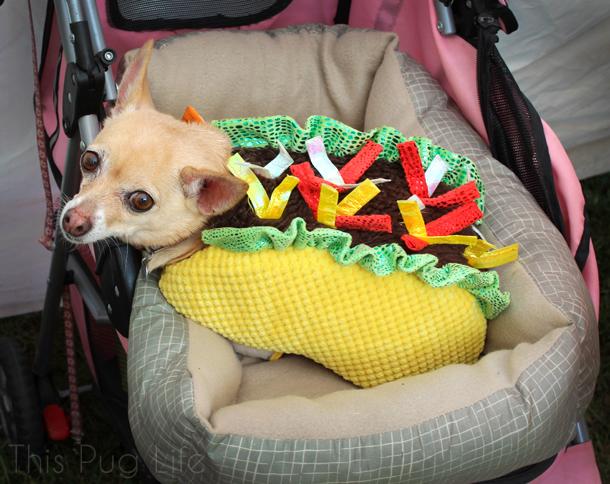 howloween-chihuahua-taco