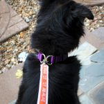 Practice Collar Safety with PetSafe KeepSafe Collars + Giveaway