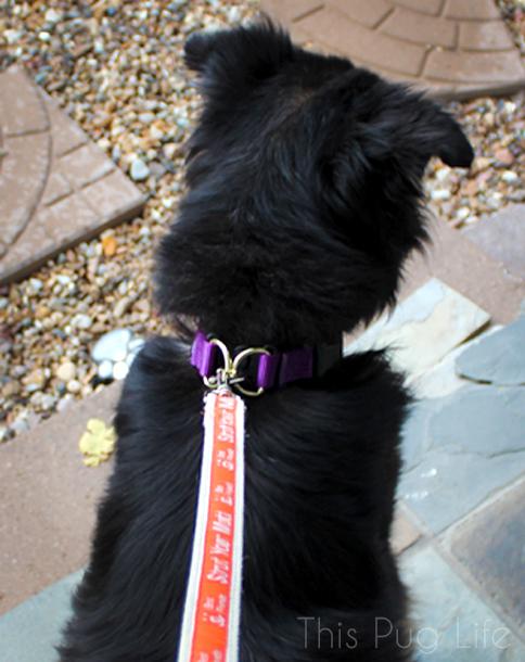 PetSafe KeepSafe Break-Away Collar