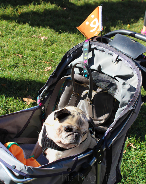 Pug Strut Your Mutt dog stroller