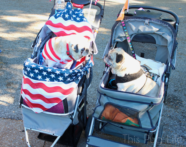 Strut Your Mutt Pug Strollers
