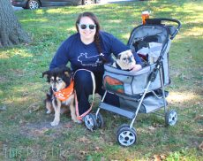 Pug and Molly Strut Your Mutt dog stroller